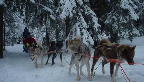 Sledehondentocht in Zweden met In Balans